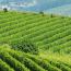 Le proposte Cia per arginare la crisi del vino dopo la pandemia