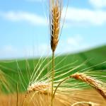Approvato il PSR del Piemonte, la CIA di Cuneo avvia gli incontri con gli agricoltori