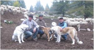 Ezio Maria Romano con alcuni pastori e con i suoi cani